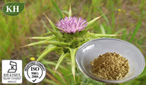 Milk Thistle Extract / Silymarin